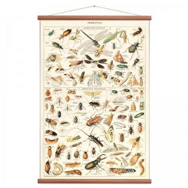 Affiche insectes vintage