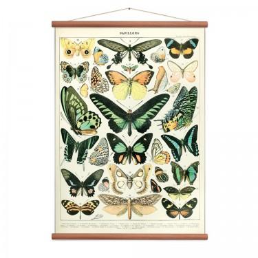 Affiche papillons vintage