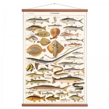 Affiche poissons vintage