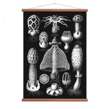 Affiche champignons vintage